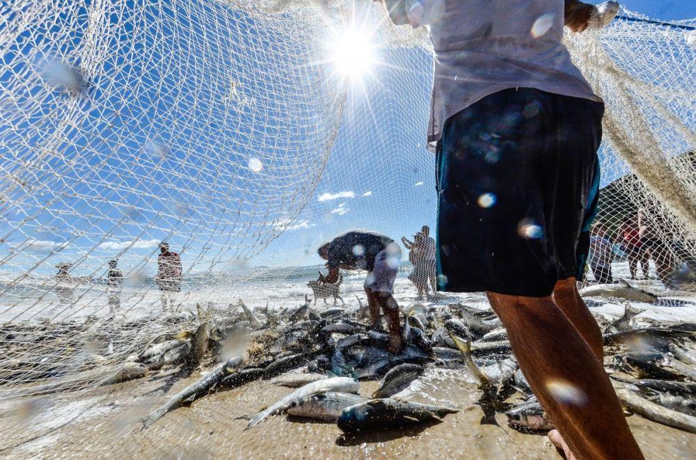 Atuação parlamentar busca melhorias para a pesca artesanal de tainha em Itapema