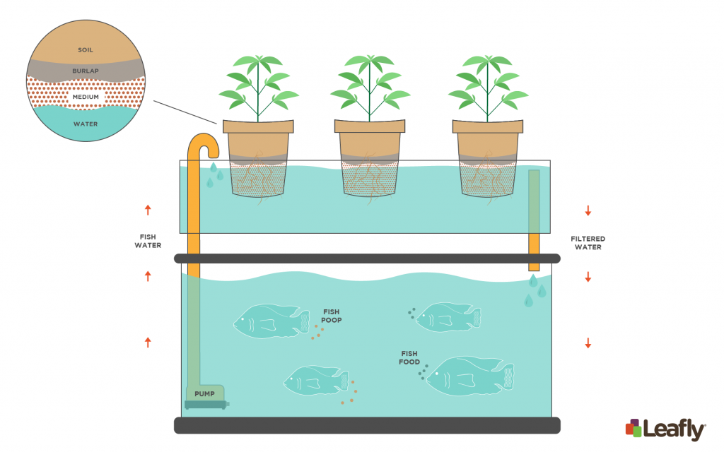 Build Your Own Aquaponics System - DIY Indoors Or Outdoors