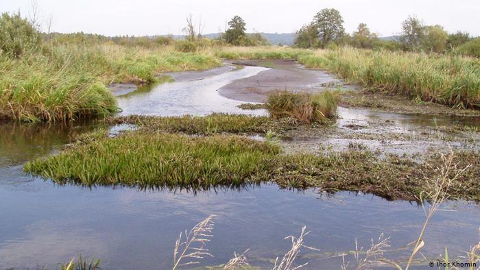 Воду для зволоження болота в урочищі Заливки беруть із сусідньої річки Ставчанки