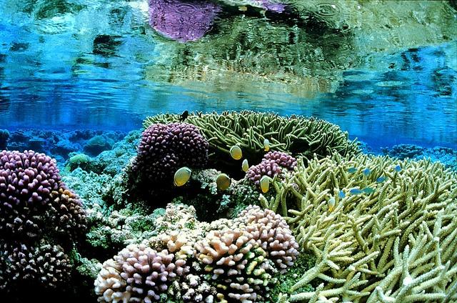 Coral gardens at Palmyra Atoll