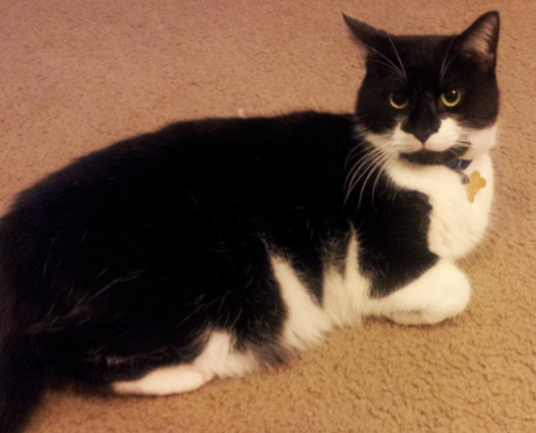 Seph the Tuxedo Cat's Page