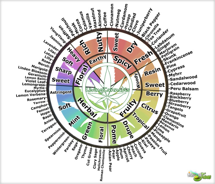 hundreds of medicinal ingredients in cannabis