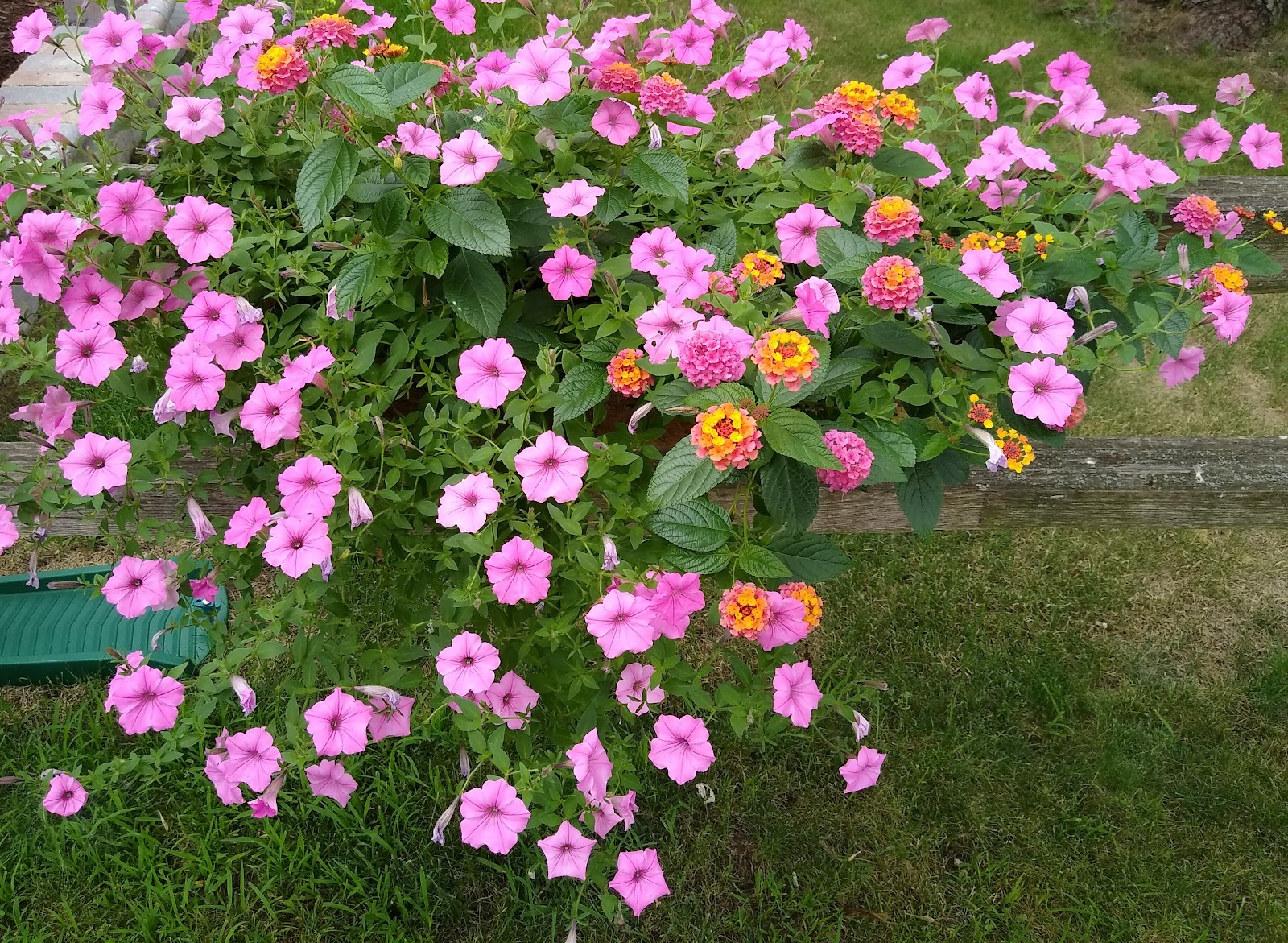flower fence basket picture