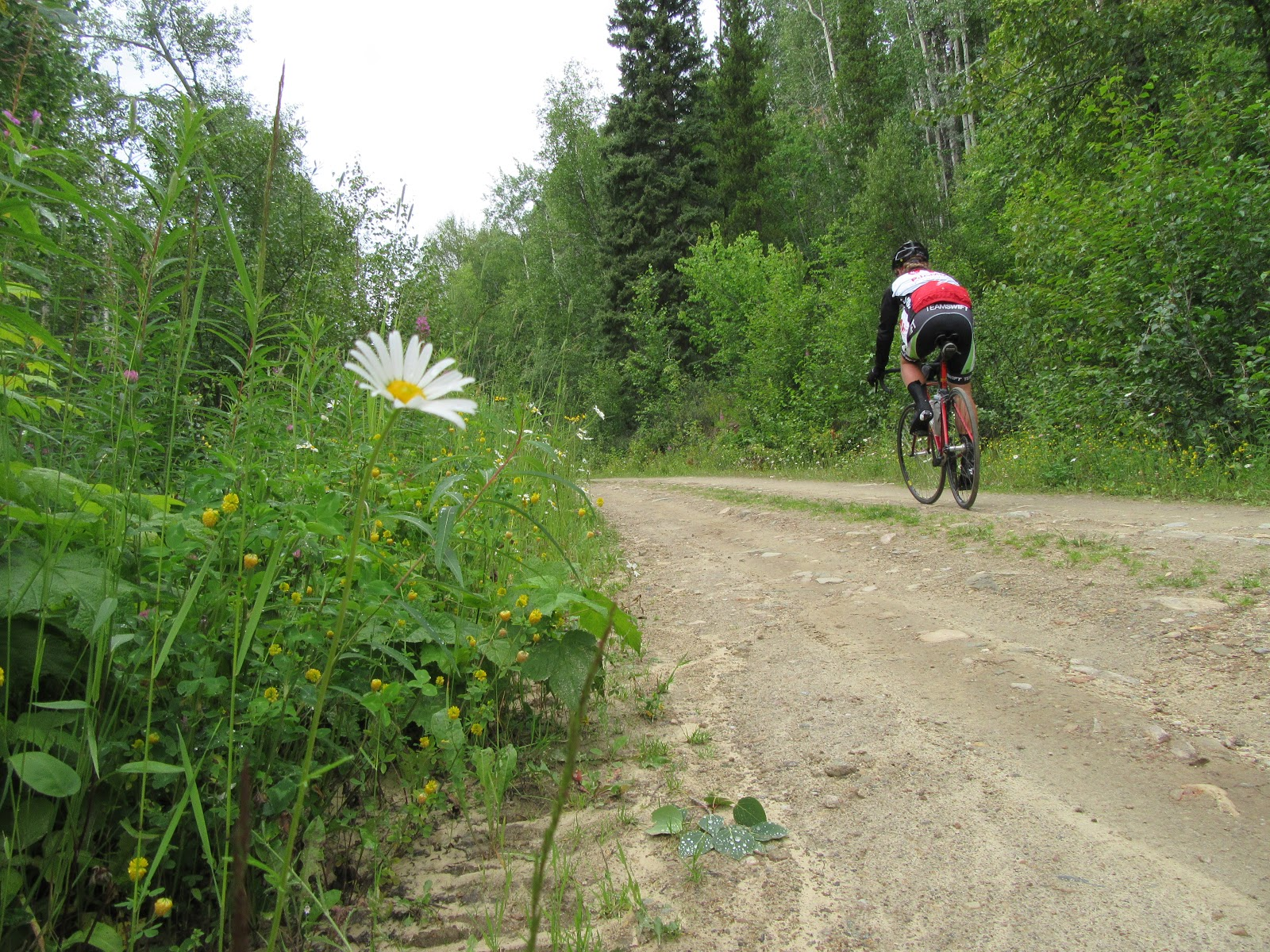 Climbing McBride Peak by bike - dirt road, flower, pjamm cycling riding bike