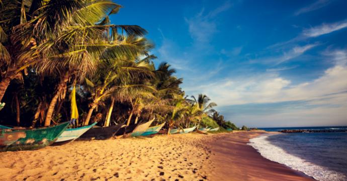 Playa de Mirissa - vida salvaje en Sri Lanka