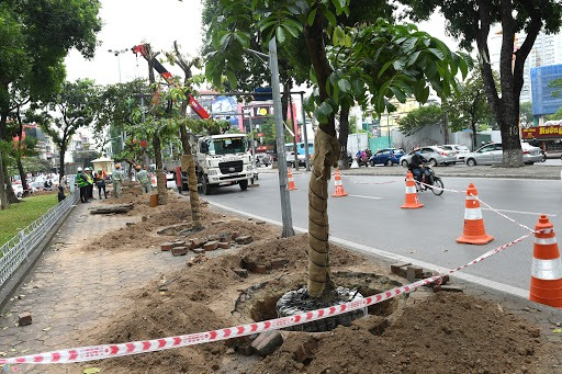 Dịch vụ cắt tỉa cây xanh sẽ mang đến tính mỹ quan cho đô thị
