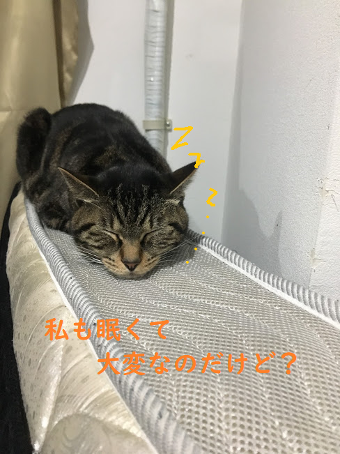 関東と四国で開催?2018年1月・2月開催の全国の猫イベント一覧!