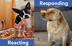 Respond Vs. React: How to Keep Your Cool in Times of Stress - Mindful  Minutes