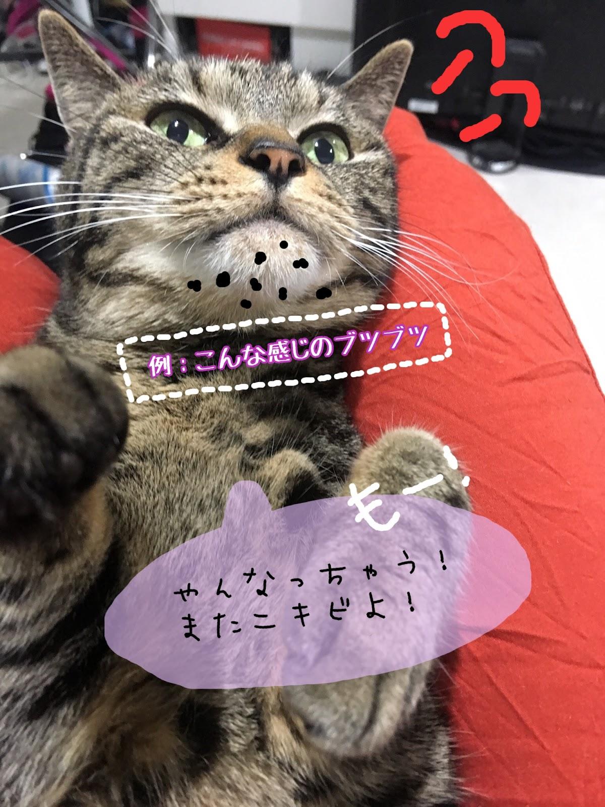 あごの下に猫ニキビが出来た時の原因と治し方について