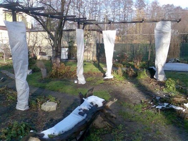 Укрытие ствола яблони на зиму