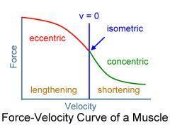 http://cdn2.bigcommerce.com/server3800/mfsnjj1q/product_images/uploaded_images/muscle-force-velocity-curve.jpg