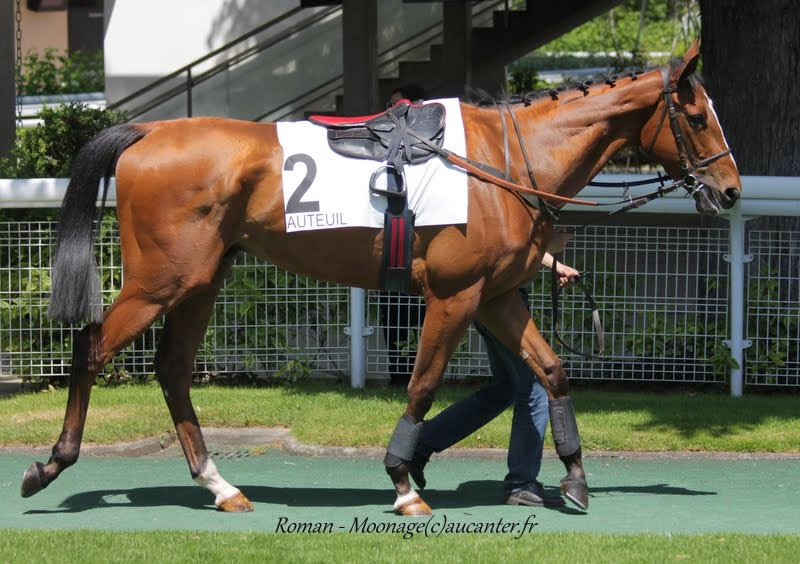 Photos Auteuil 22-05-2015 IyCujKzBxF8Nfi5XaYi_GgCnthUy1G4y6O0qi_NqsViN=w800-h564-no