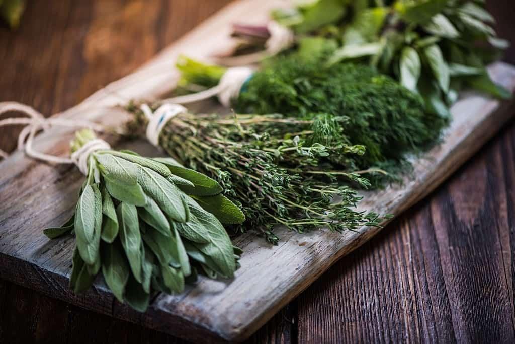 Alternative herbs of cilantro