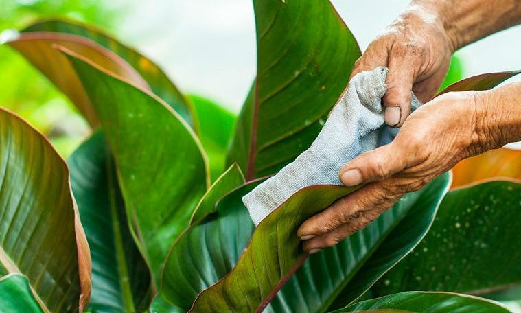 Cây Xanh Miền Nam là một đơn vị uy tín chuyên cung cấp dịch vụ chăm sóc cây xanh