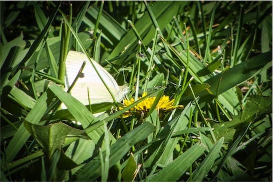 Tiny B Fly.jpg