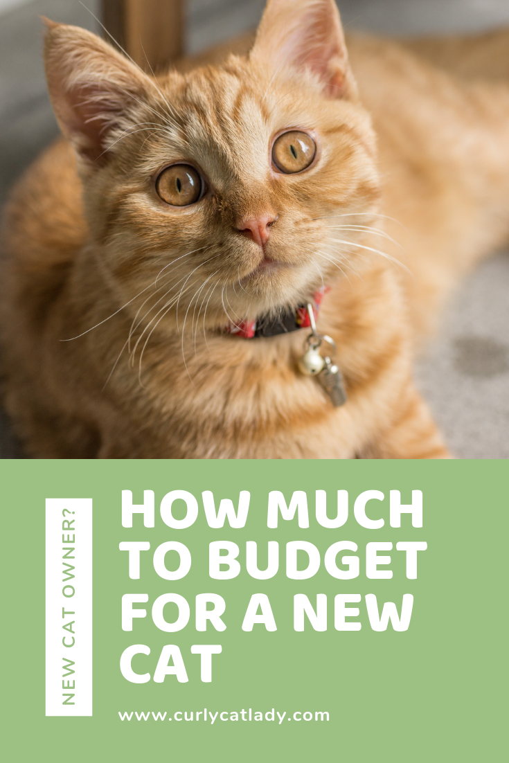 How much to budget for a new cat pinterest graphic