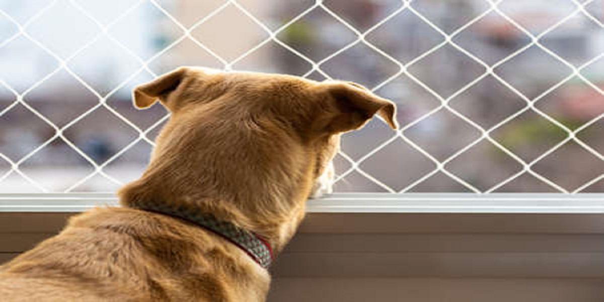 Cachorro olhando pela janela  Descrição gerada automaticamente