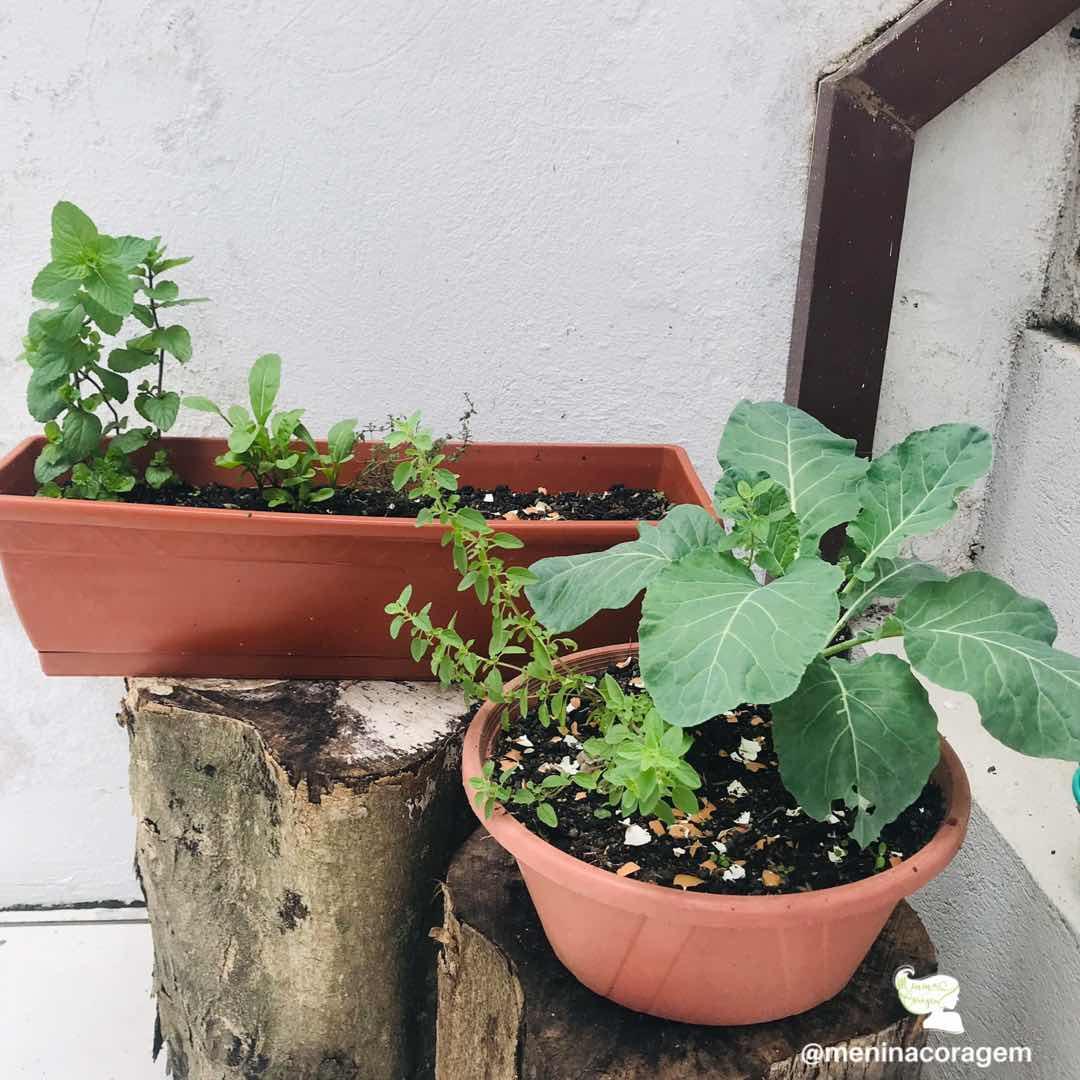 #ParaTodosVerem foto de dois vasos em cima de dois troncos com uma parede branca ao fundo. No vaso da frente, arredondado, é possível ver uma couve plantada e uma mudinha de orégano. No vaso de trás, no estilo jardineira, vê-se três mudinhas. Fim da descrição.