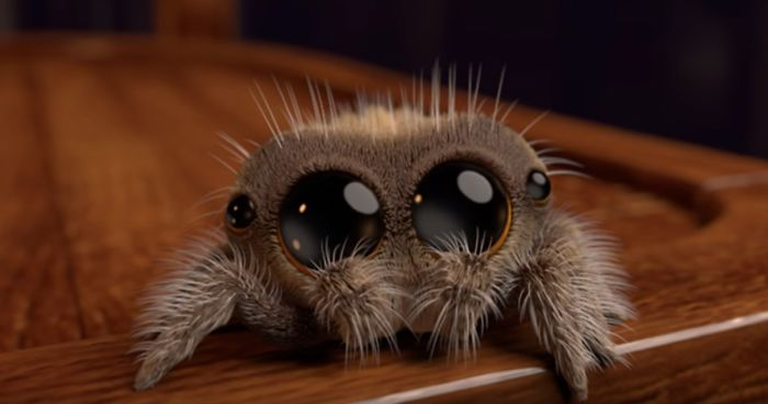 How to sleep after seeing a spider? (Tips)