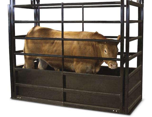 Cân gia súc-cân động vật cho ra kết quả trọng lượng động vật chính xác
