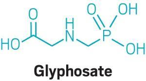 Glyphosate is not carcinogenic, US EPA says