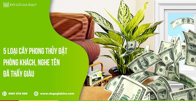 5 loại cây phong thủy đặt phòng khách, nghe tên đã thấy giàu
