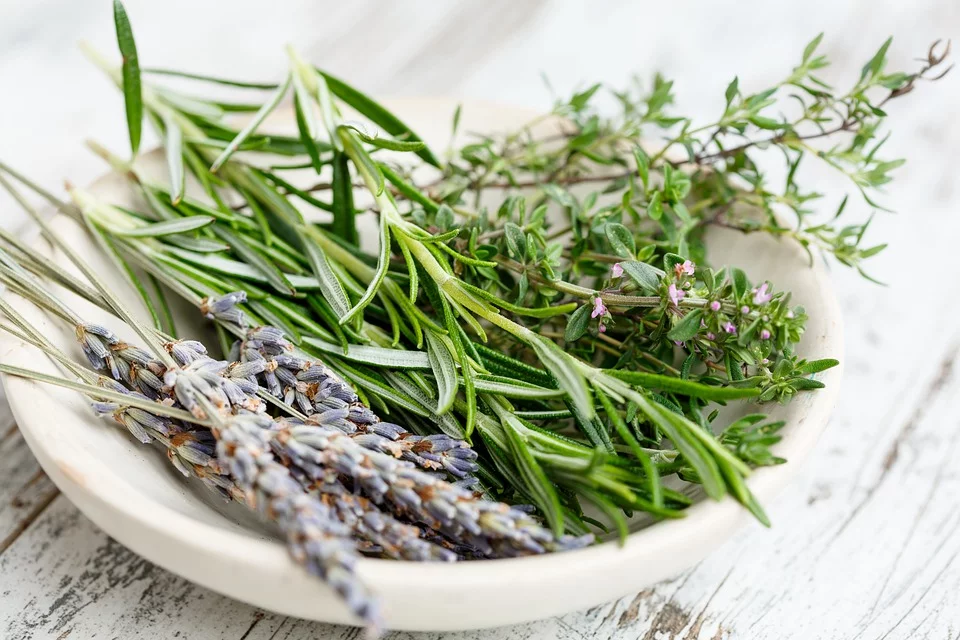 Lavender, Rosemary - Best Houseplants