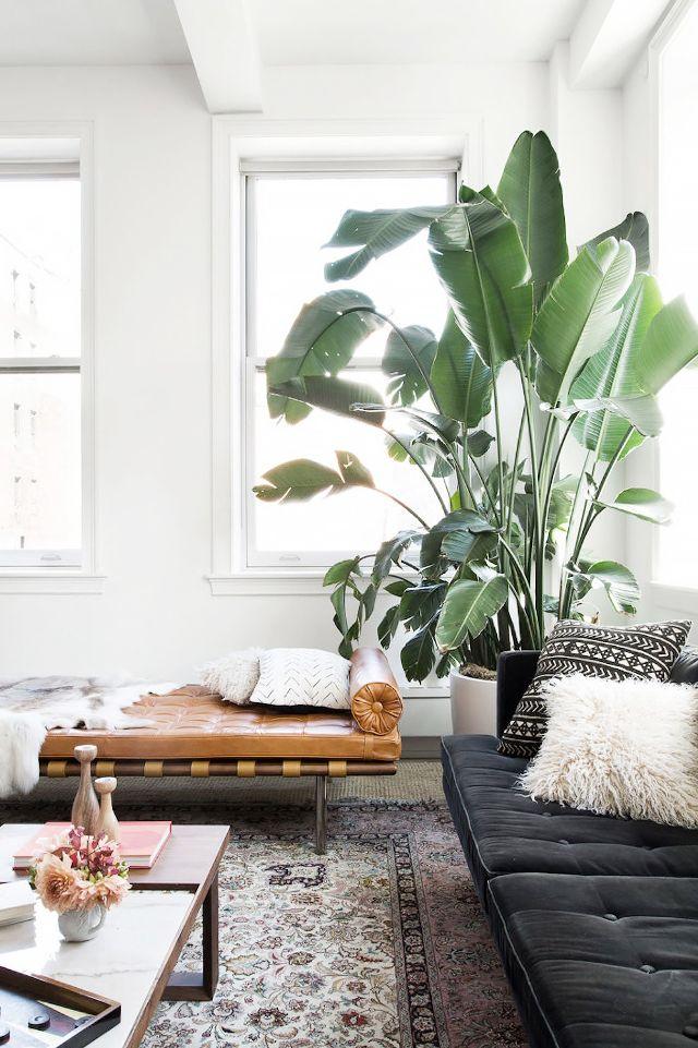 A Large Plant