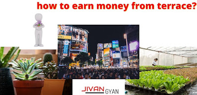 how to earn money from terrace?