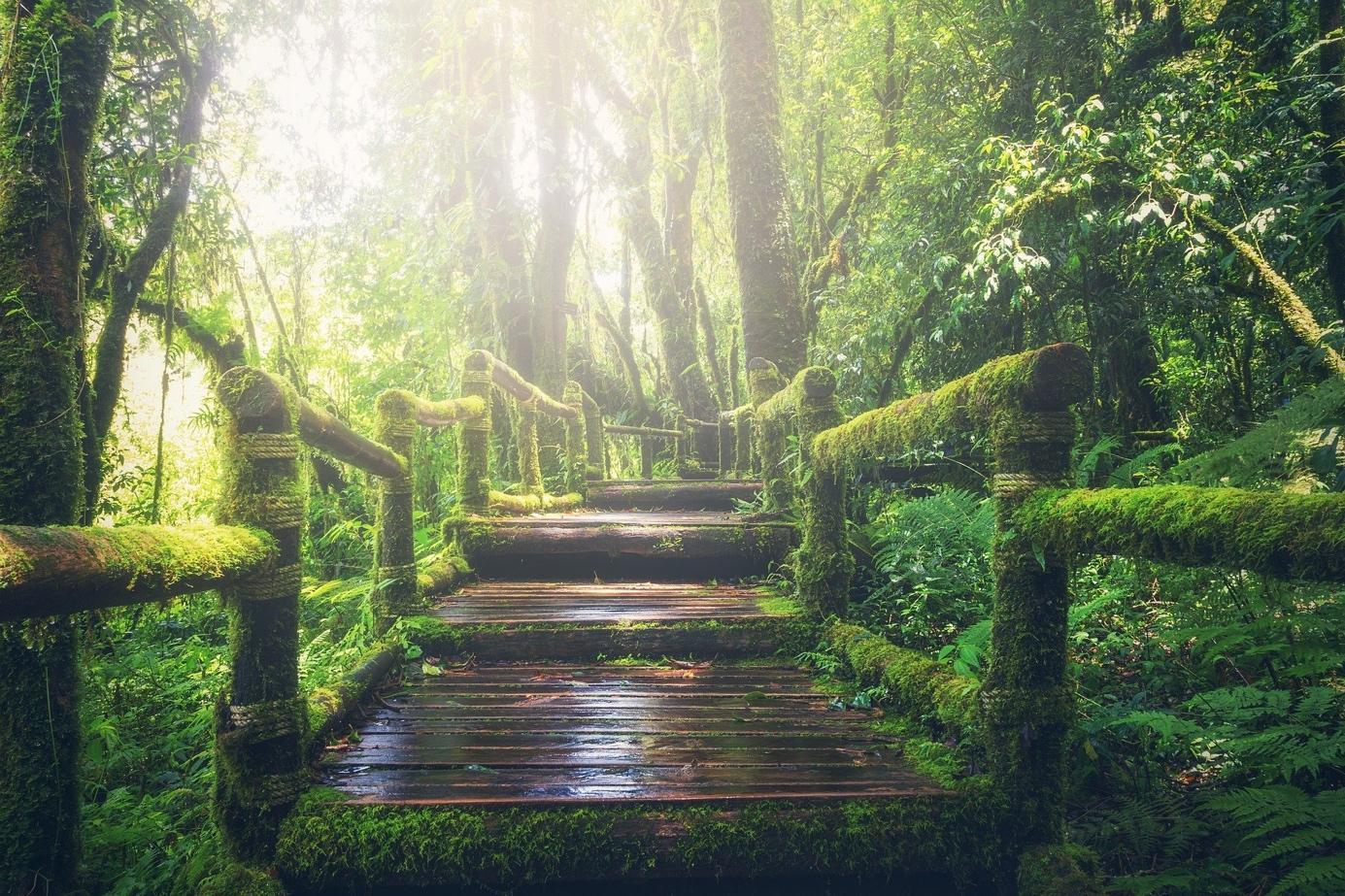Une image contenant arbre, herbe, extérieur, forêt  Description générée automatiquement