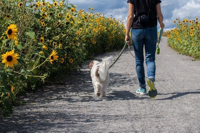dog walking in the field
