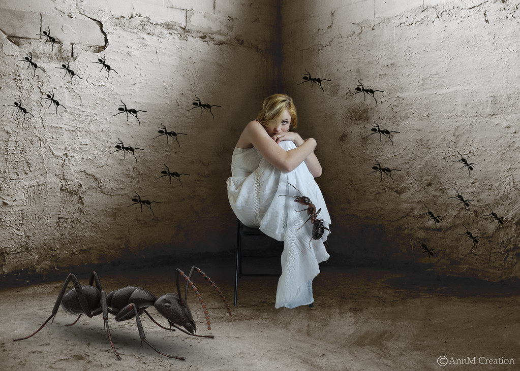 What is Myrmecophobia? (An Overview)