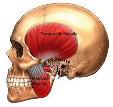 Image result for tmj joint pain