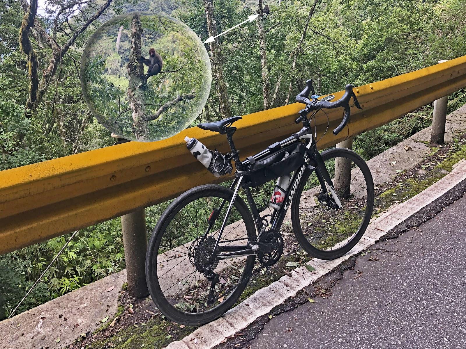 Biking up Wuling Pass East - monkey in tree