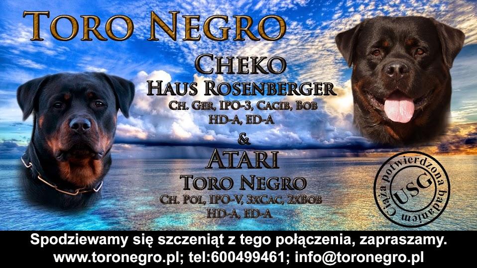 Domowa hodowla rottweilerów Toro Negro