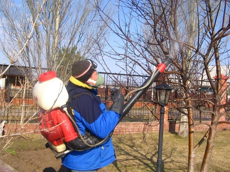 Обработка садовых культур мочевиной