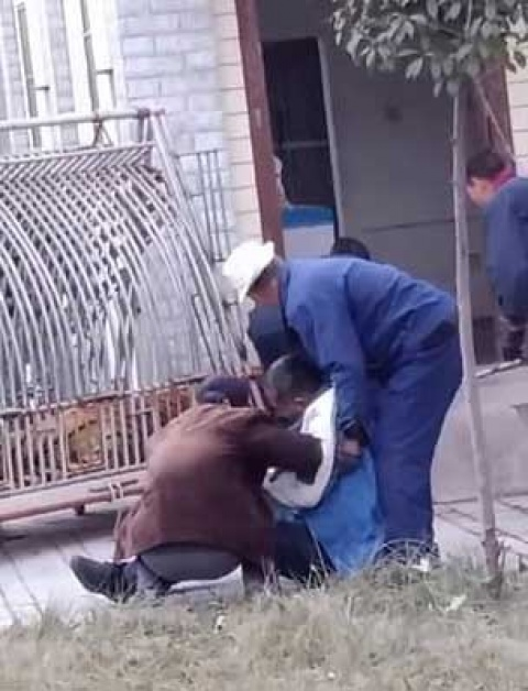 Tigre 'despierta' de anestesia y muerde a veterinario