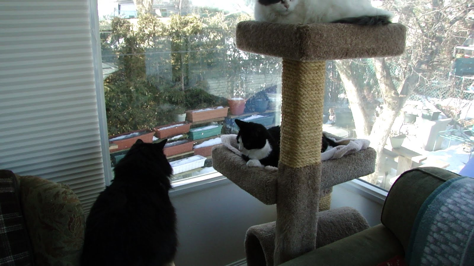 CATS IN SUNROOM.jpg