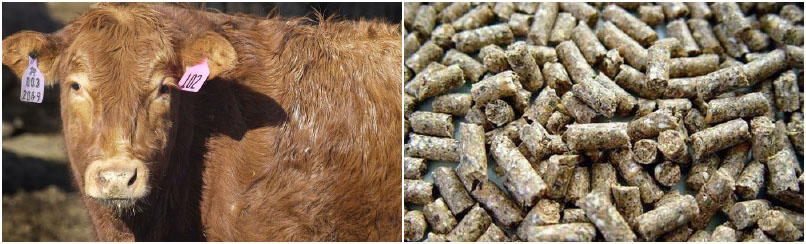 build a feed mill for making animal feed pellets for cattle