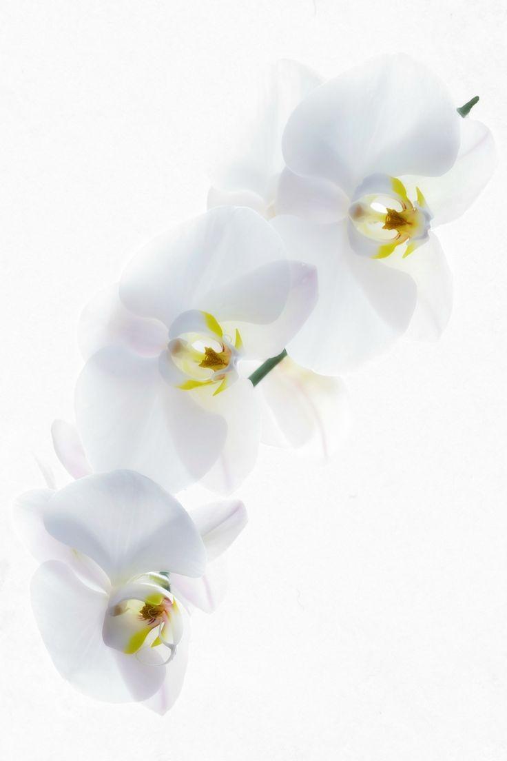 پسزمینه سفید در عکاسی