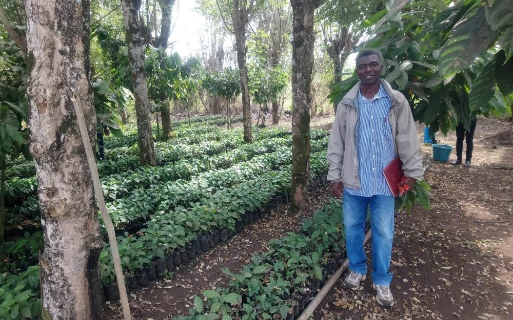 berçario de variedades híbridas de café