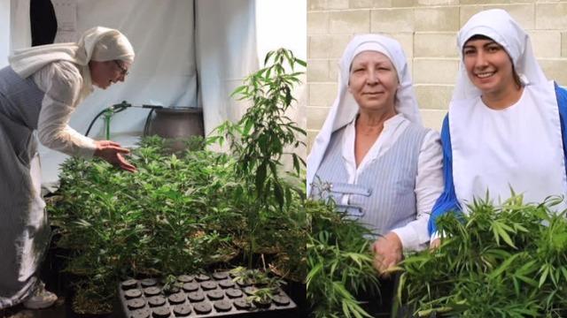 California Nuns and THC Free Marijuana
