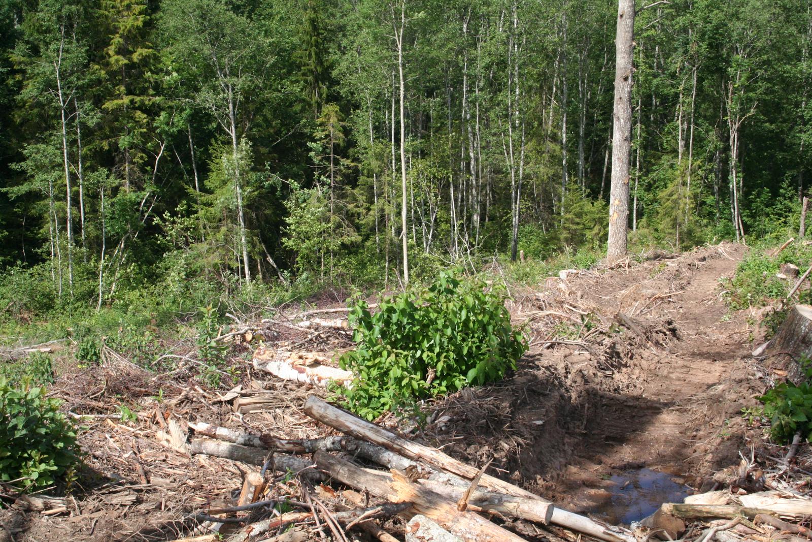 Lageraie kokkuveotee Otepää looduspargis. Foto: L. Kuresoo
