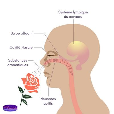L'odorat – sens dessus dessous – Eau de Soi