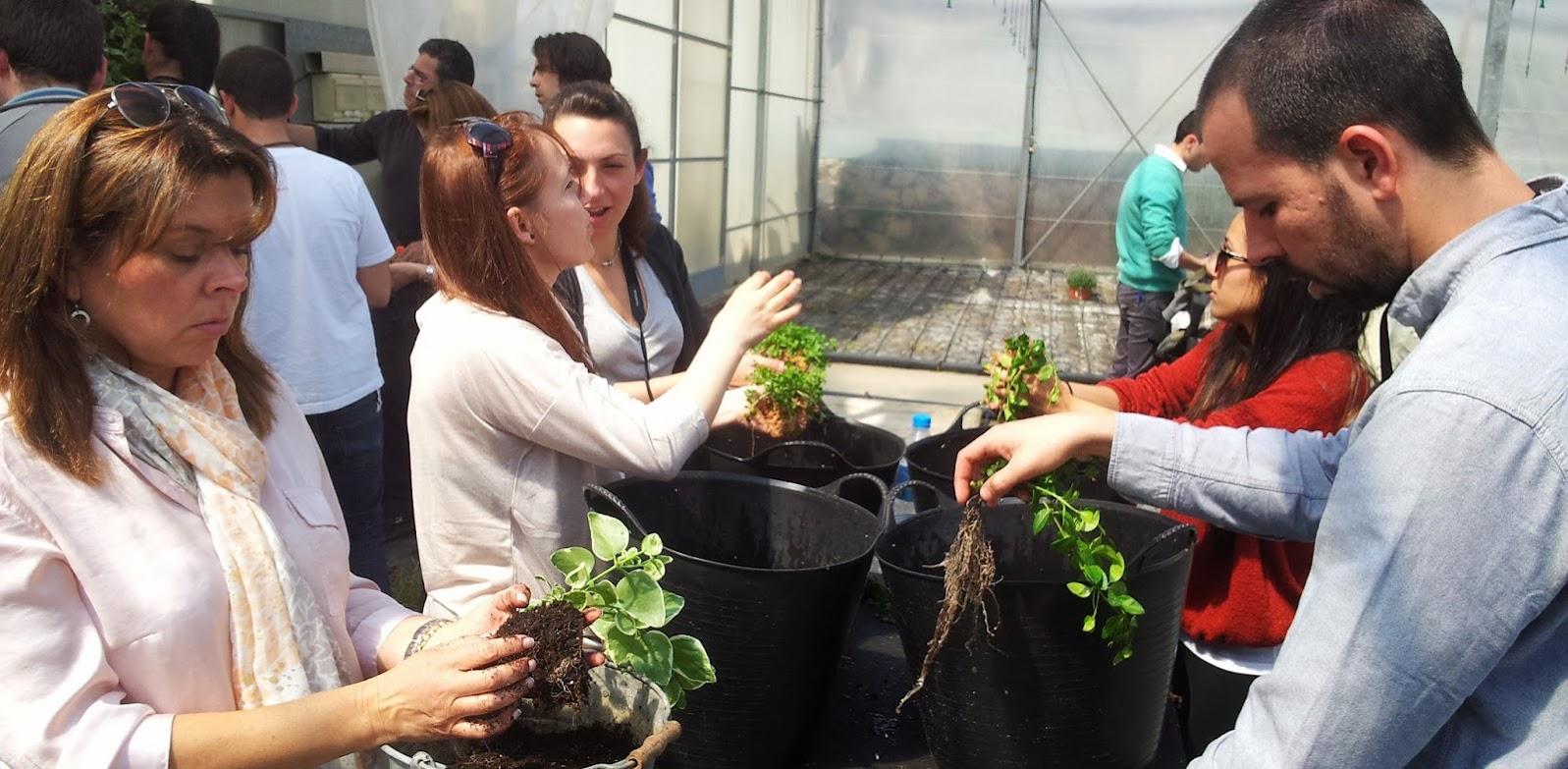Jardines verticales curso formación cursos de jardines verticales jardín vertical vertical garden courses education