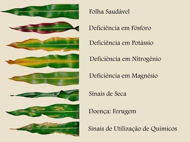 Sintomas de deficiência nutricional em plantas