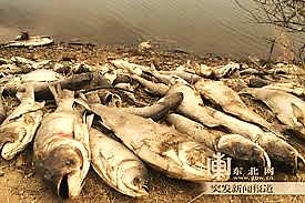 Vì sao tháng 4/2016 lại có nhiều vụ cá chết hàng loạt trên thế giới?