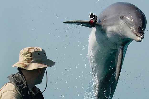 Дельфін ВМС США