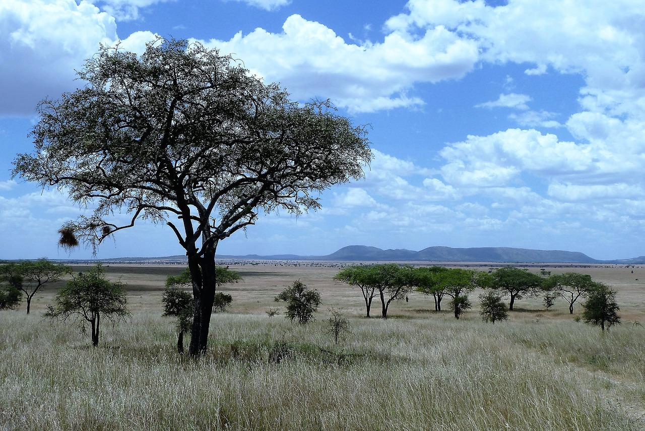 Serengeti National Park - Plains.jpg