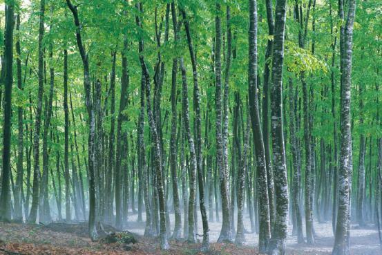 美人林景色